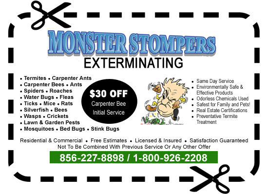 $30 off carpenter bee extermination service